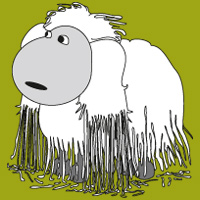Sheep with straight hair